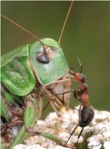 Больше дела, меньше слов. Это выражение наиболее точно описывает жизнь мурваьёв