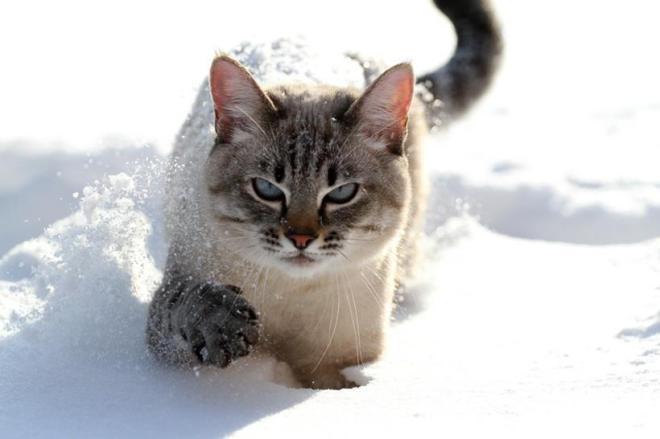 Ленивые коты
